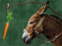 1-PICTURE-1-donkey-and-carrot-Copy.jpg
