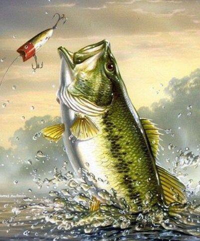 fa1e498858b90c9505d86fcad4a4488d-bass-fishing-pictures-watercolor-animals.jpg
